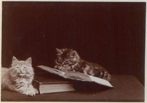The Globe Kittens (1902)  by Ernest J. Rowley
