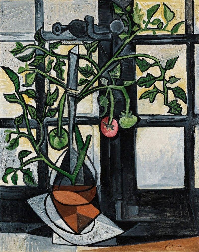 pablo-picasso-plant-de-tomates-1944